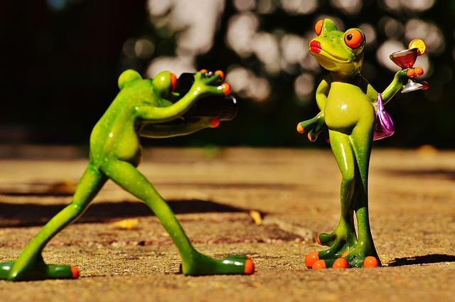 frog-881639_640